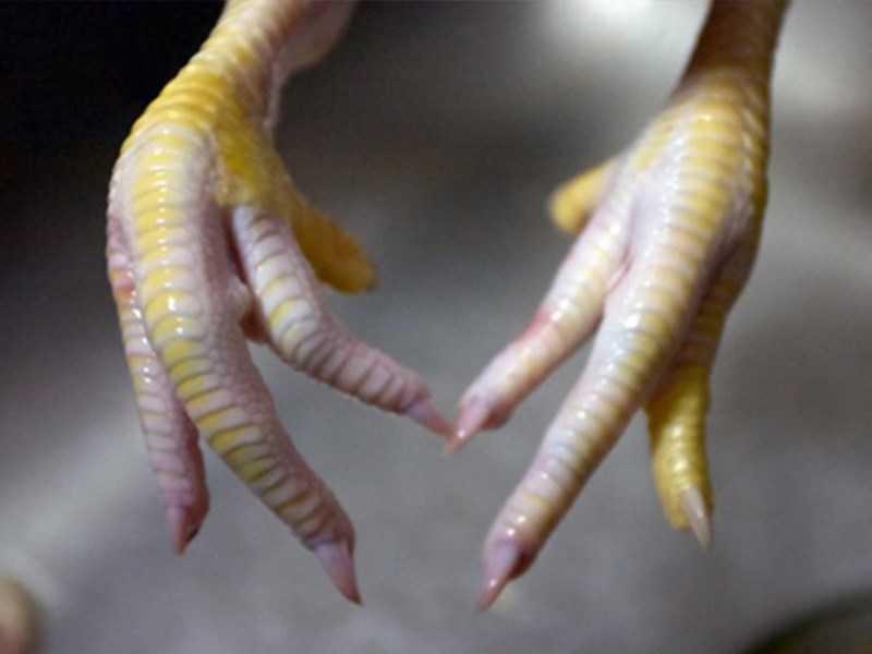 độ đàn hồi của các khớp chân gà