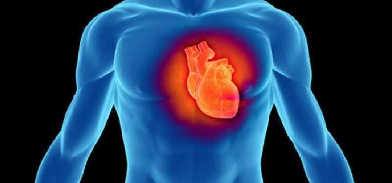 Trà trắng giảm nguy cơ mắc bệnh tim mạch