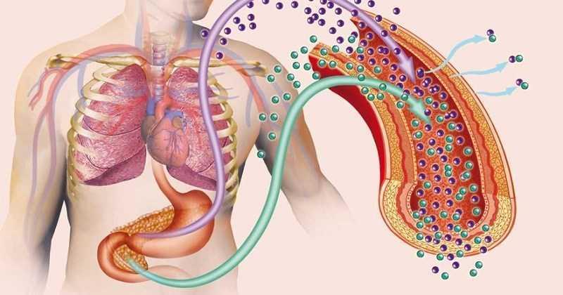 Trà trắng làm giảm nguy cơ kháng insulin