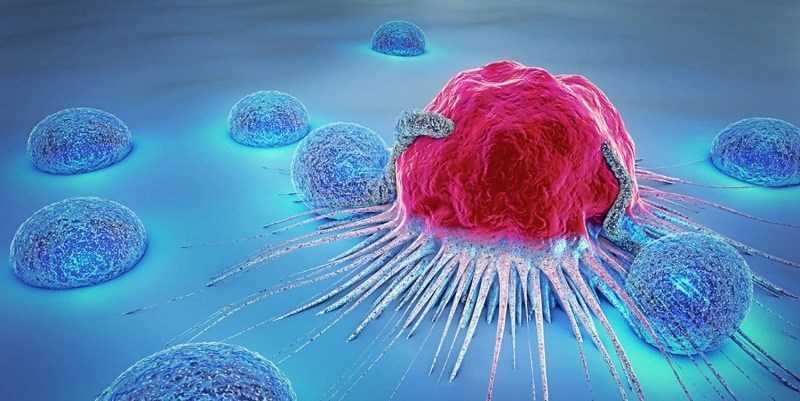 Đậu bắp giảm nguy cơ ung thư