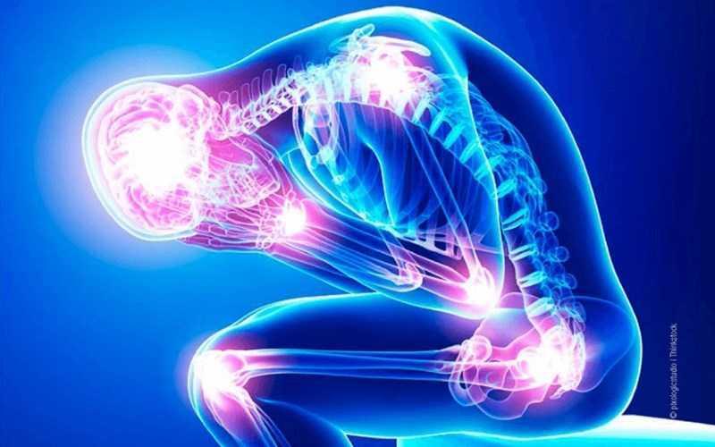 Hạt phỉ giúp ngăn ngừa và giảm viêm