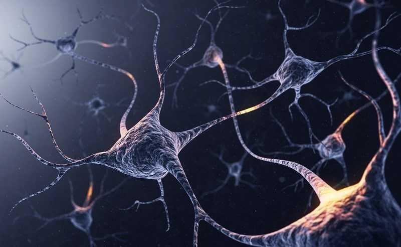 Vitamin B12 hỗ trợ và tăng cường sức khỏe não bộ