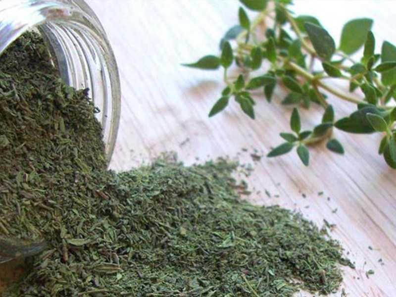 Thành phần dinh dưỡng lá cỏ xạ hương