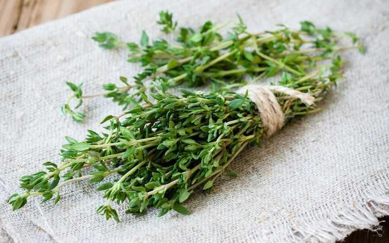Lá cỏ xạ hương là gì?