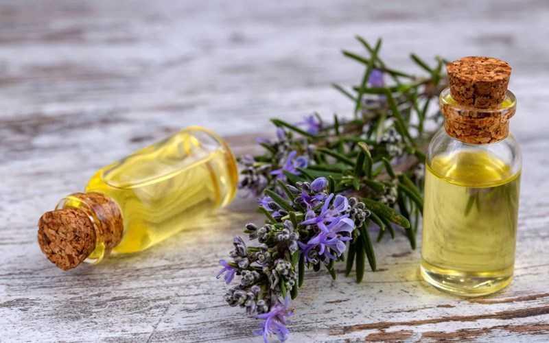 Tinh dầu hương thảo là gì