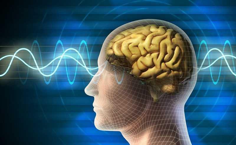 Bạc hà cải thiện chức năng não