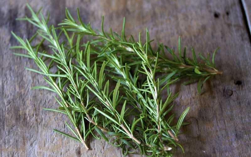 Rosemary - Hương thảo