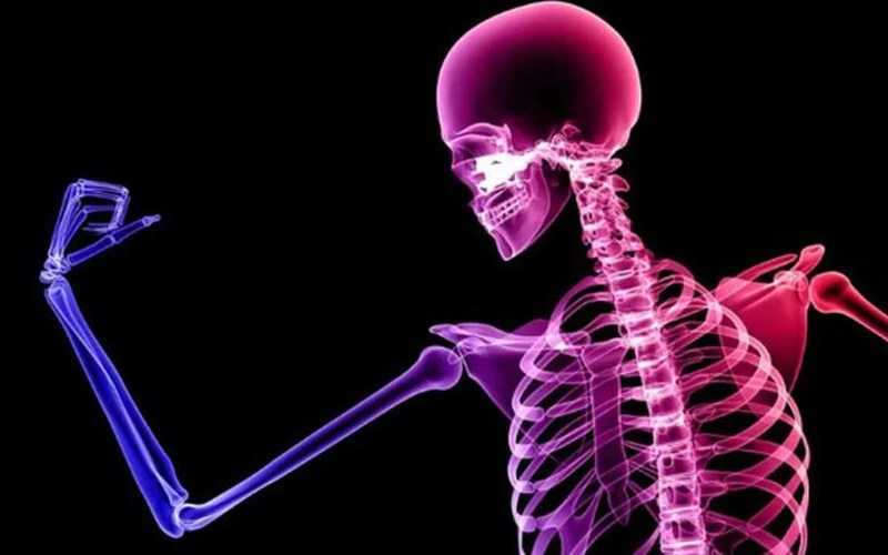 Cây xô thơm giúp hỗ trợ sức khỏe của xương