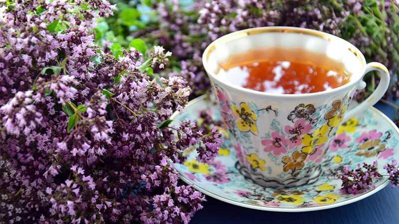 Thành phần dinh dưỡng của trà rooibos