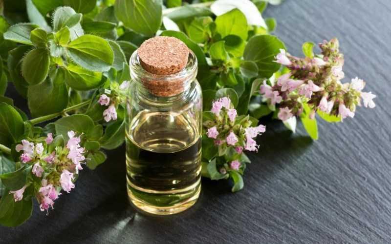 Tinh dầu Oregano rất tốt cho việc chữa bệnh