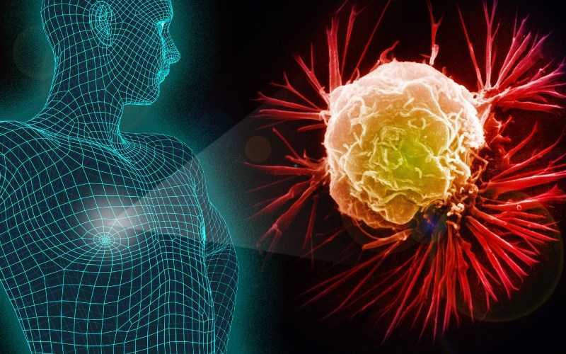 Oregano làm giảm sự phát triển của tế bào ung thư