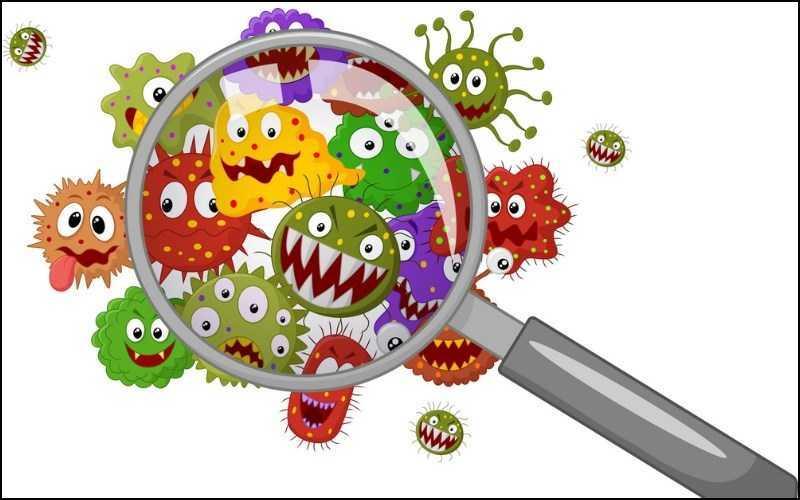 Oregano có thể chống lại vi khuẩn