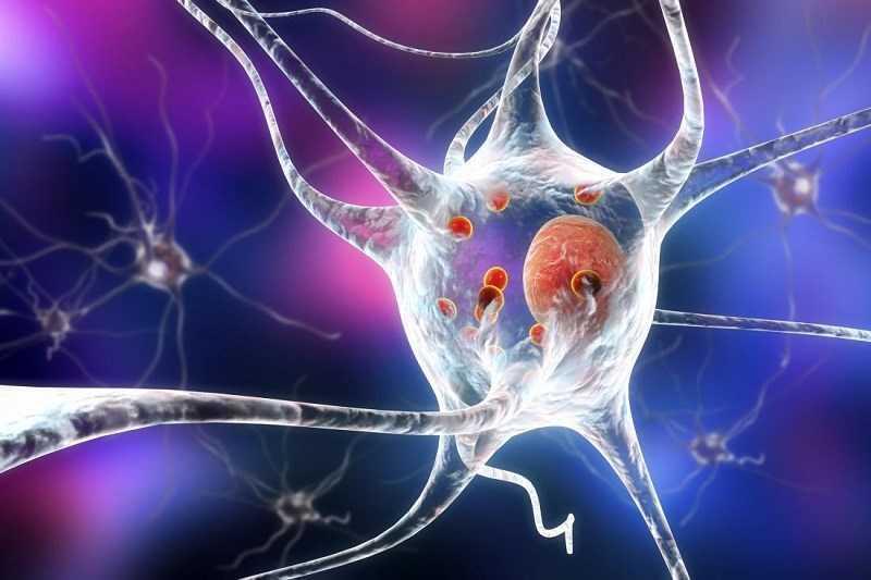 Đậu giun làm giảm các triệu chứng bệnh Parkinson