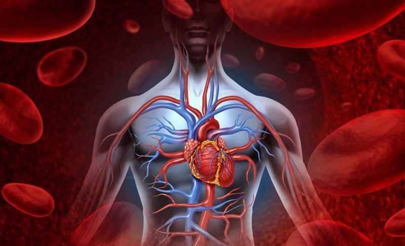 Uống nước nóng giúp cải thiện lưu thông máu
