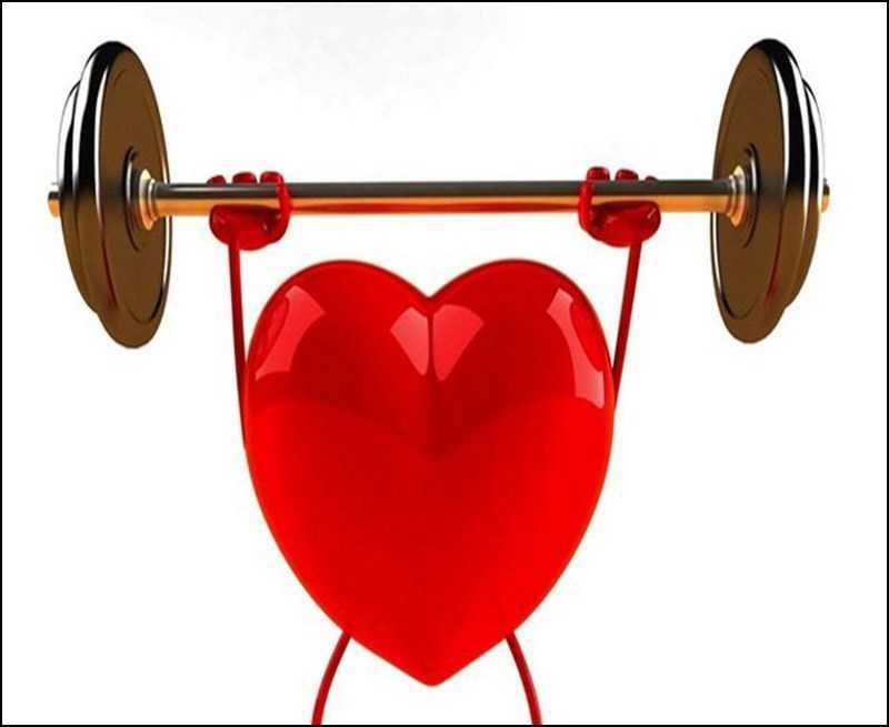 Nhân sâm đất hỗ trợ sức khỏe tim mạch