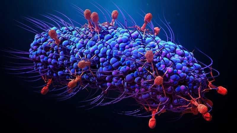 Nước cốt dừa chống lại vi rút và vi khuẩn