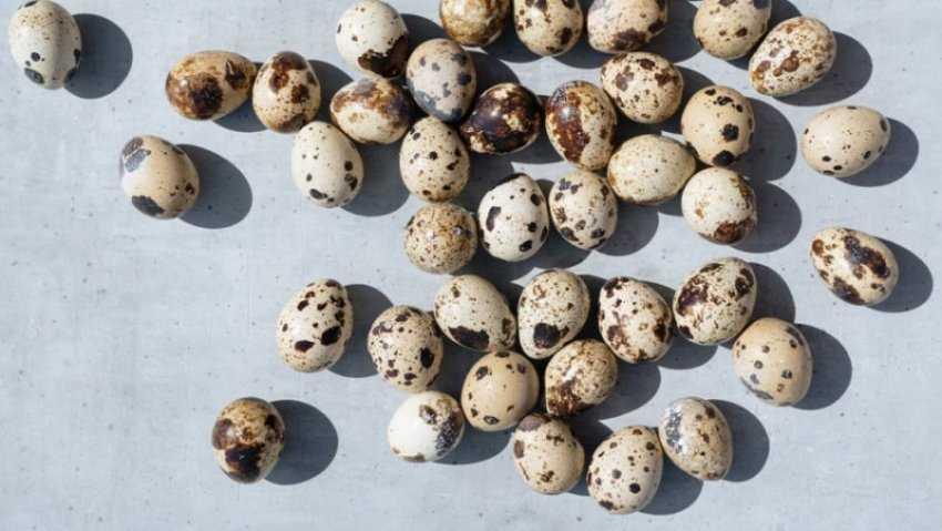 Tác dụng, lưu ý và món ăn ngon của trứng cút