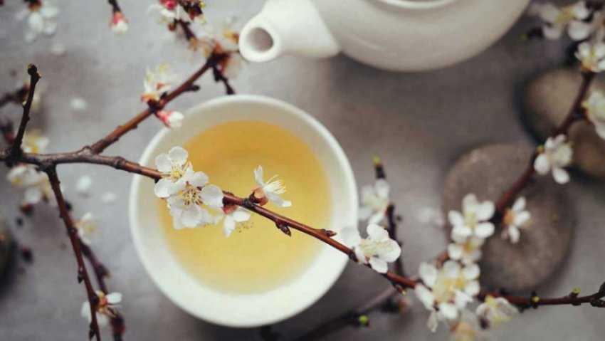 Trà trắng là gì?  Tác dụng của trà trắng