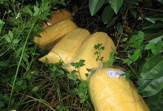 cơm nếp gà thối bán cho quán cơm cháy nếp và bánh mì ở TP.HCM - 3