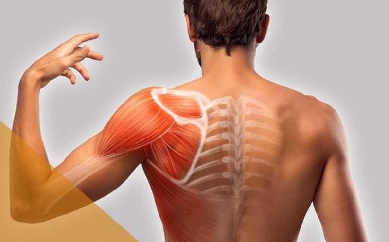 Ngòi ca cao có đặc tính chống viêm