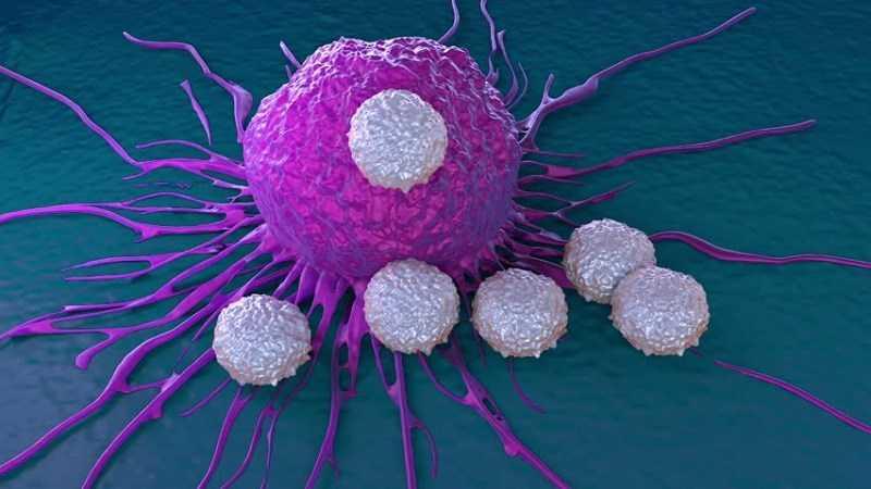 Atiso hỗ trợ phòng chống ung thư