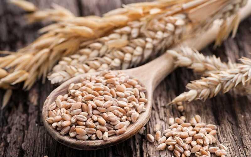 Thành phần dinh dưỡng của lúa mì