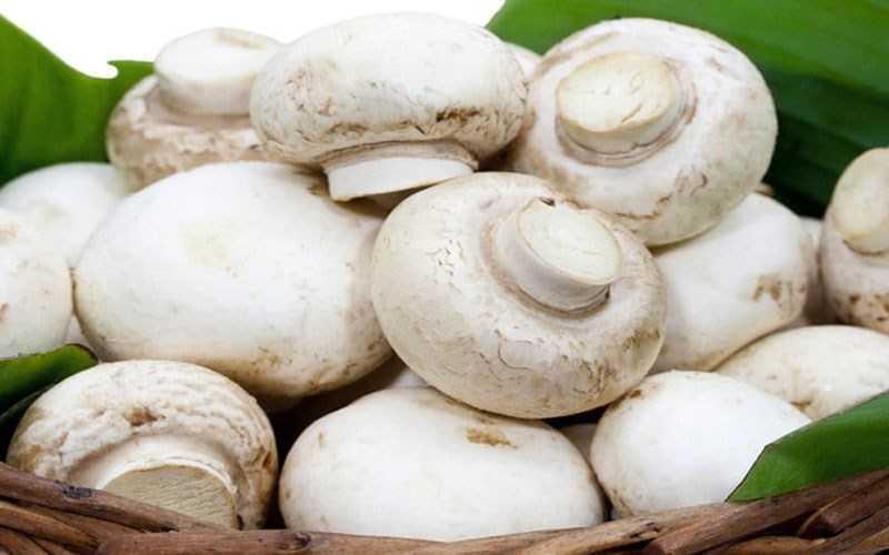 Giảm cholesterol trong máu với nấm mỡ