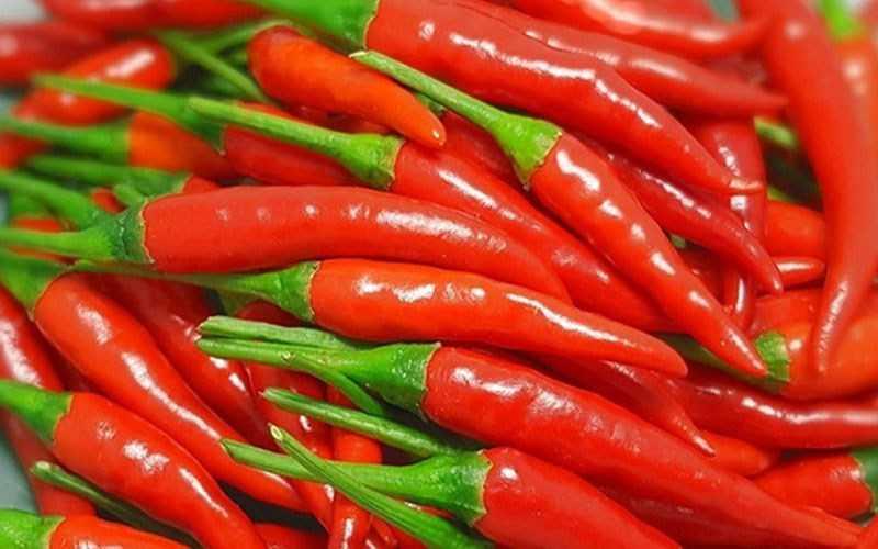 Cách bảo quản ớt tươi