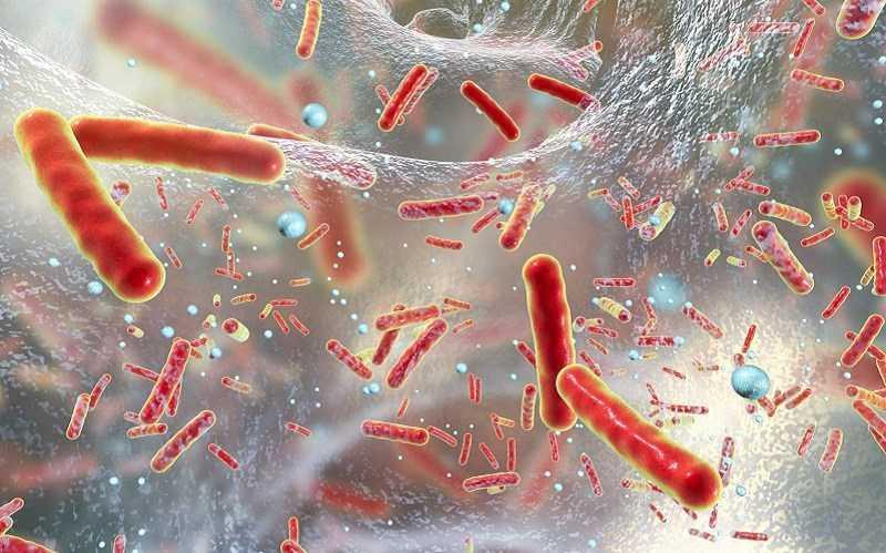 Yerba Mate giúp chống nhiễm trùng và nhiễm trùng