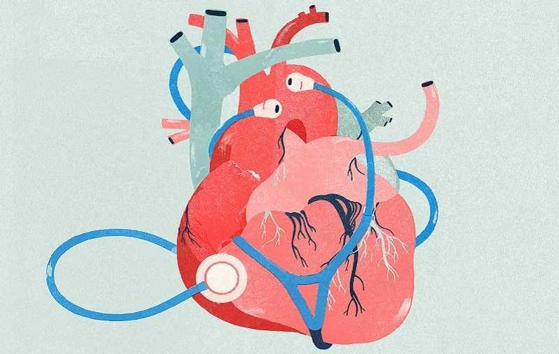 Yerba Mate giảm nguy cơ mắc bệnh tim