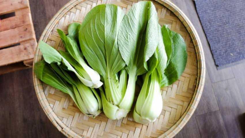 Bok choy - bok choy là gì, công dụng của bok choy, các món ngon từ bok choy