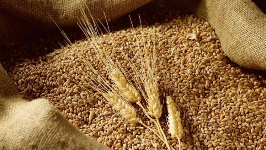 Lúa mì là gì?