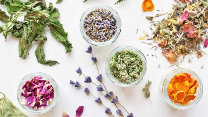 10 loại thảo mộc giúp cải thiện sức khỏe và tâm lý
