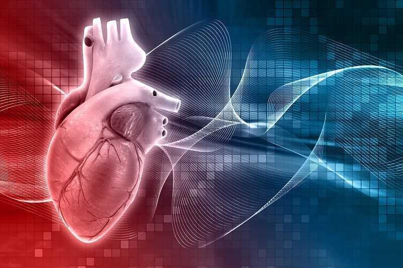 Cần tây thúc đẩy sức khỏe tim mạch