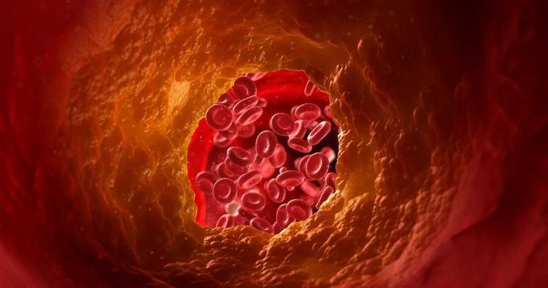 Cần tây giảm cholesterol xấu