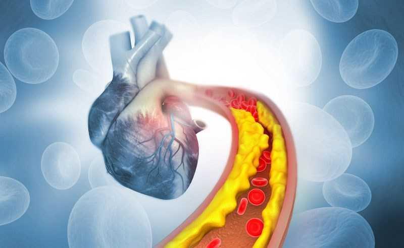 Gấc ngăn ngừa các bệnh tim mạch