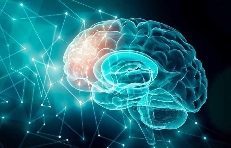 Ashwagandha cải thiện chức năng não