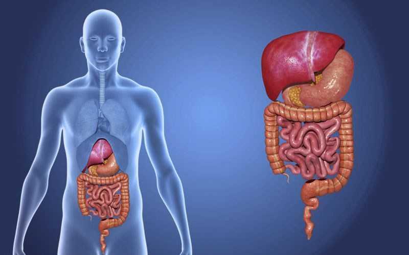 Tác hại của rượu đối với cơ quan nội tạng