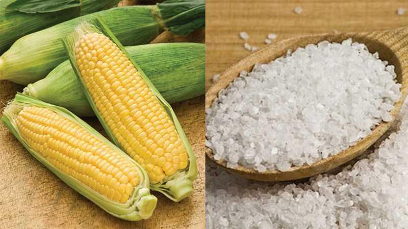 Nguyên liệu của món bắp (ngô) luộc ngon, thơm, đơn giản
