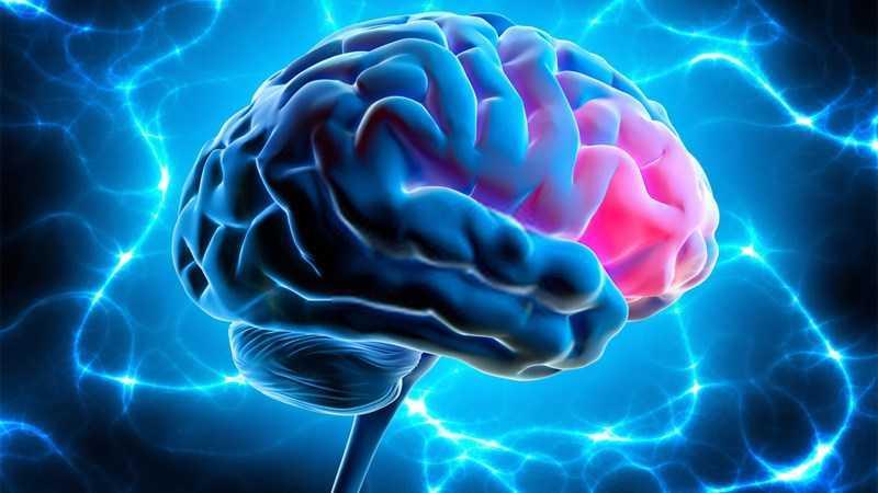 Ngô tốt cho não