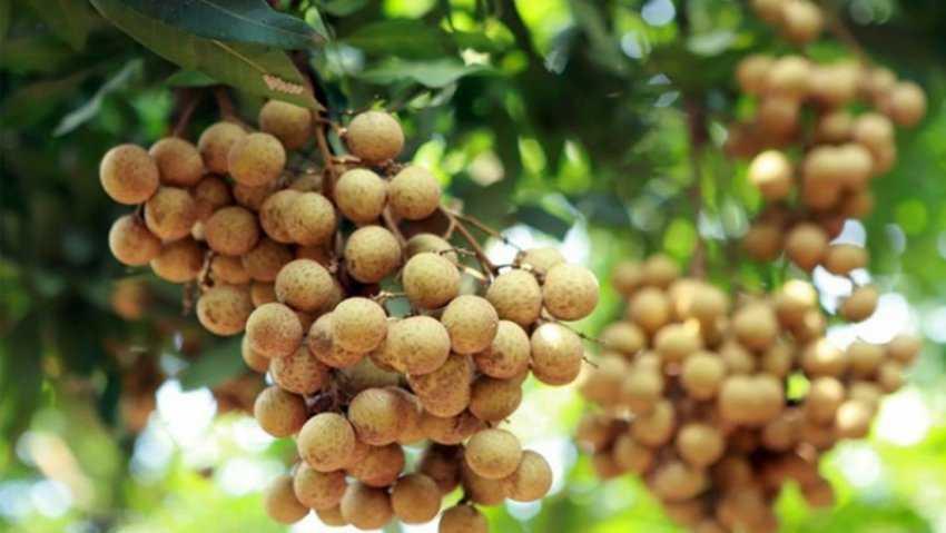 Trái cây nóng