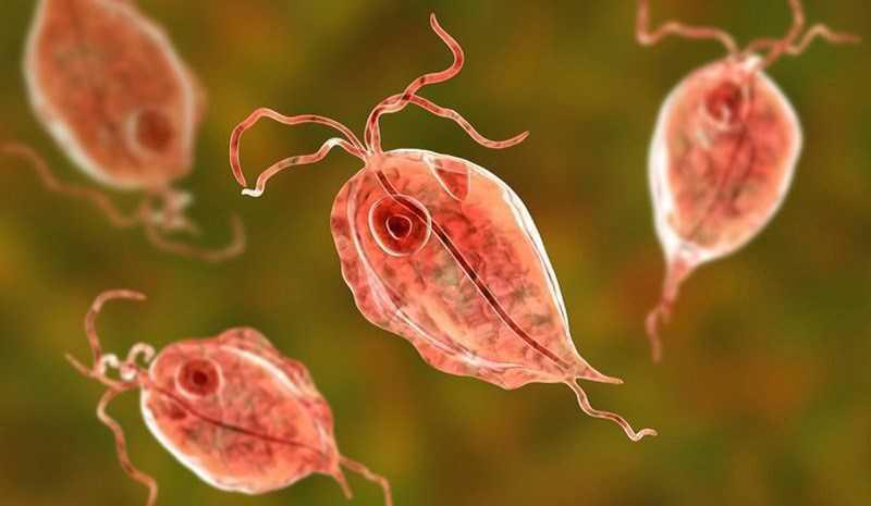Ăn rau sống dễ nhiễm giun sán, ký sinh trùng.