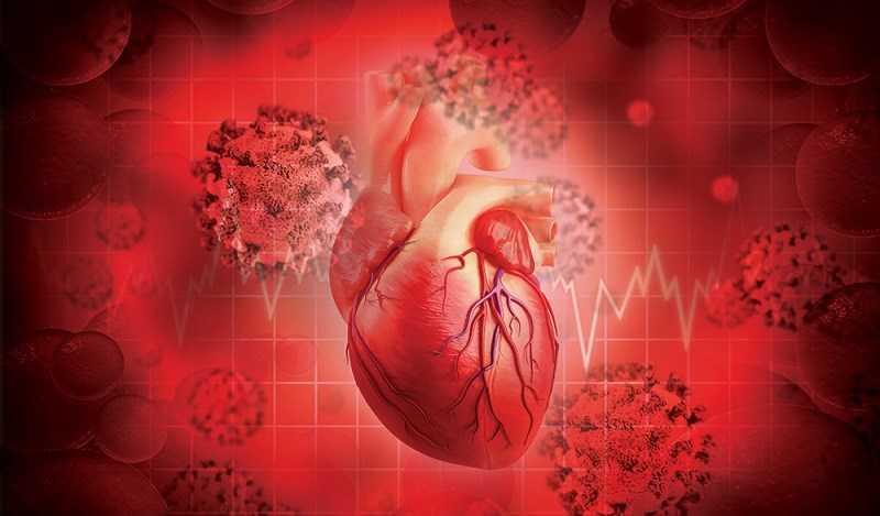 Rau sống hỗ trợ sức khỏe tim mạch