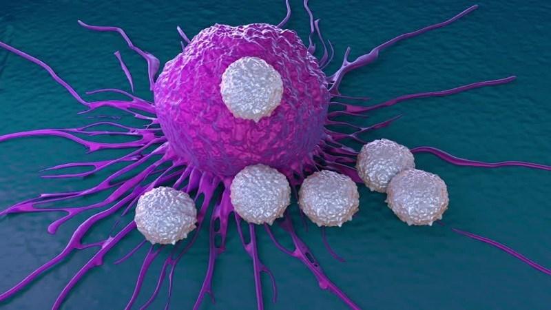 Củ có đặc tính chống ung thư