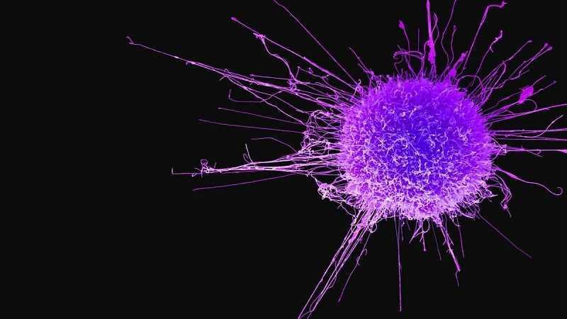 Dầu ô liu hỗ trợ điều trị ung thư