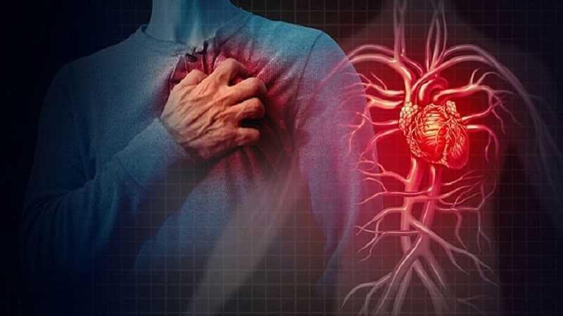 Dầu ô liu hỗ trợ sức khỏe tim mạch
