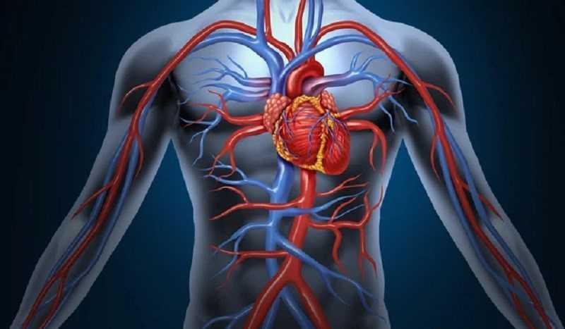 Ăn nhãn giúp cải thiện lưu thông máu