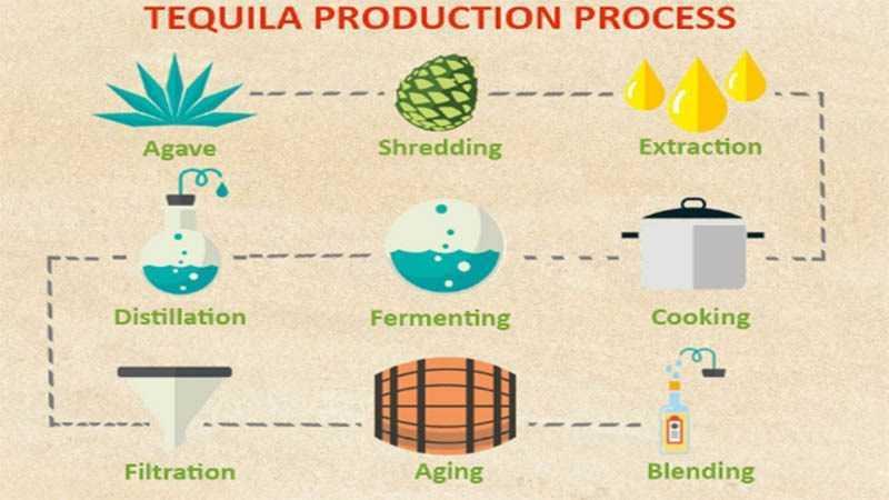 Quy trình sản xuất rượu tequila