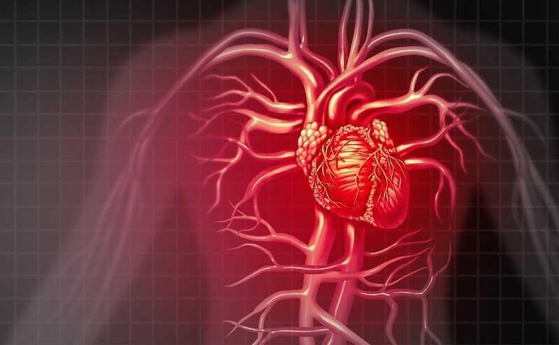 Hạt hướng dương hỗ trợ sức khỏe tim mạch