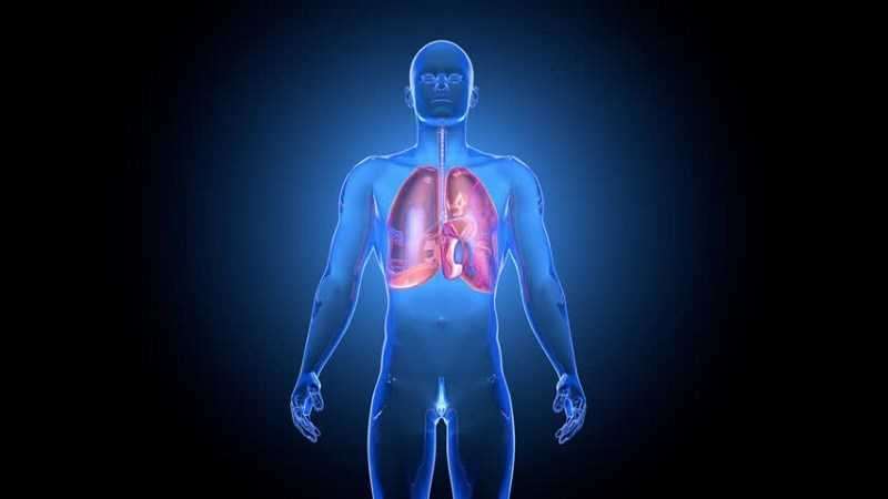 Bạch đậu khấu cải thiện hệ hô hấp